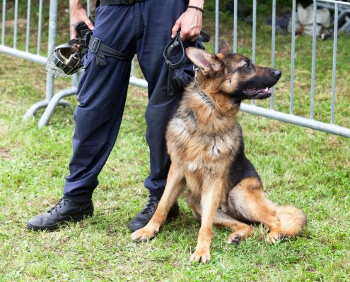 History of Military and Police K9s