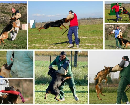 How Military and Police Dogs Are Trained