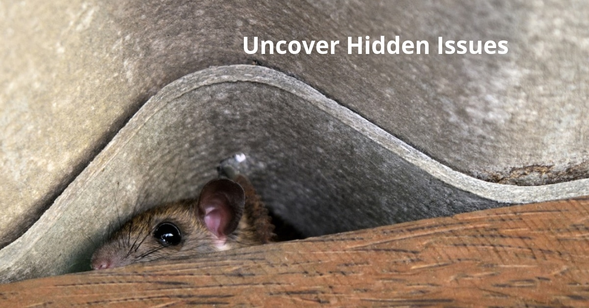 Hidden Issues What to Look for When Buying a Home Pest